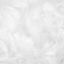 Decorative feathers - white, 12 g